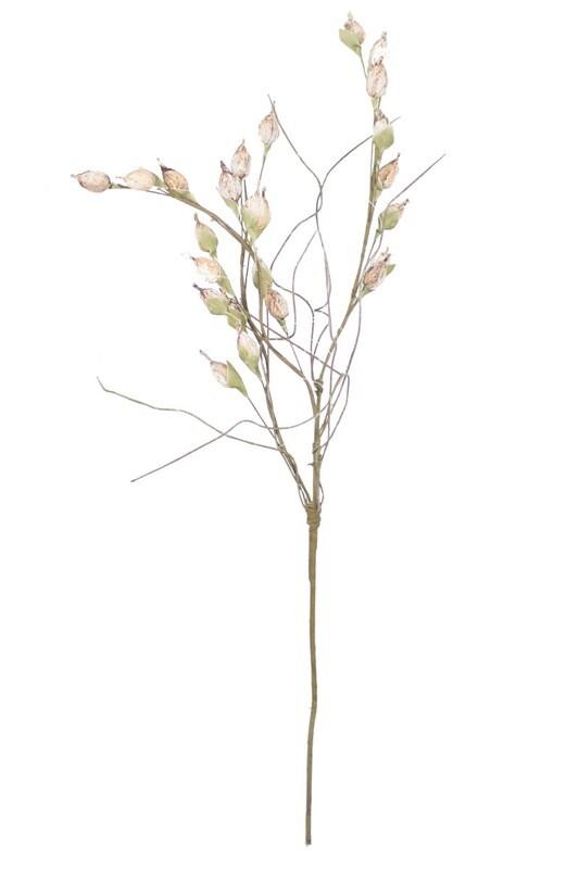 Botanica #2261