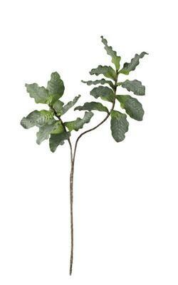 Botanica #544