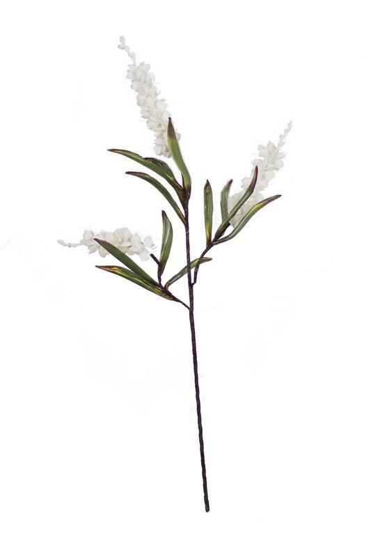 Botanica #929
