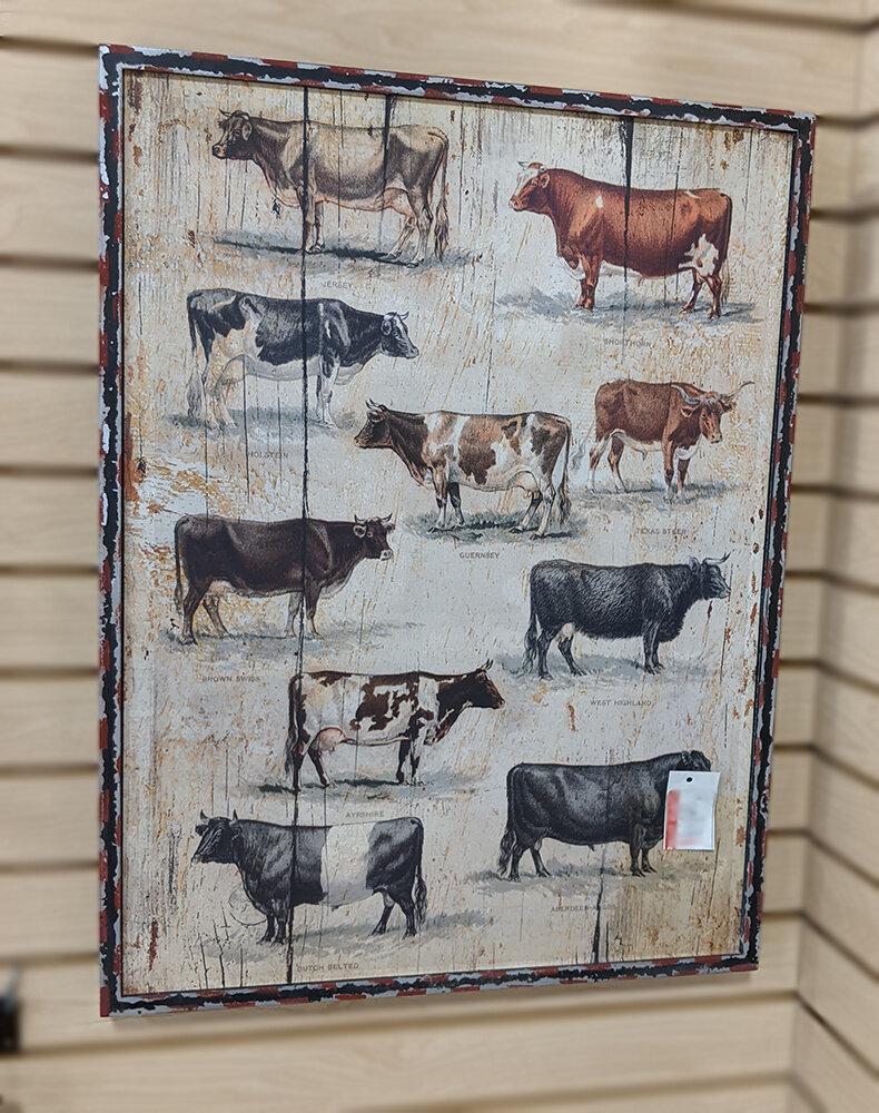 Framed Vintage Cow Breeds