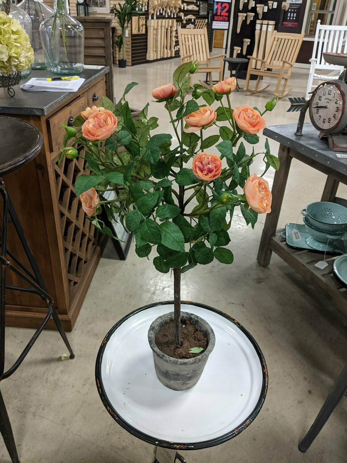 Potted Old Rose Topiary