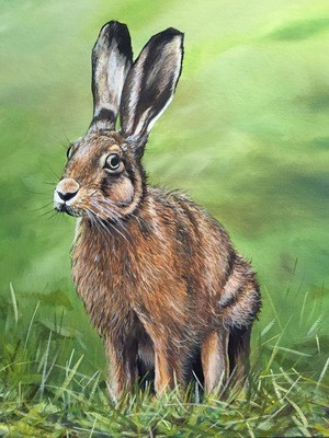 Young Hare (A3)