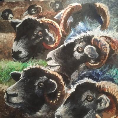 Herdwick Sheep - Canvas (A3)