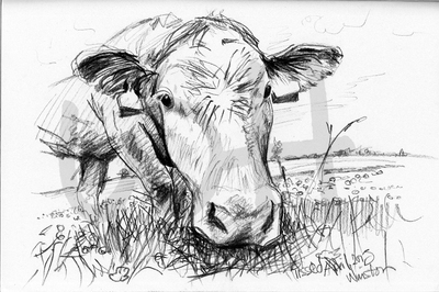 Cow Sketch Four - A4 Sketch