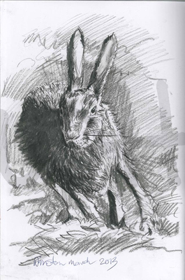 Hare in Motion (A4)