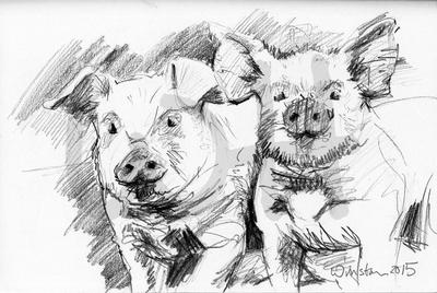 Pig Sketch Two - A4 Sketch