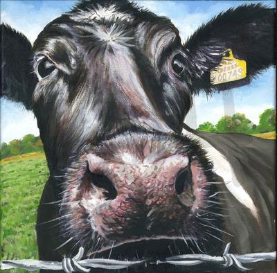 Nosey Cow (A3)