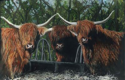 Highland Cattle (A3)