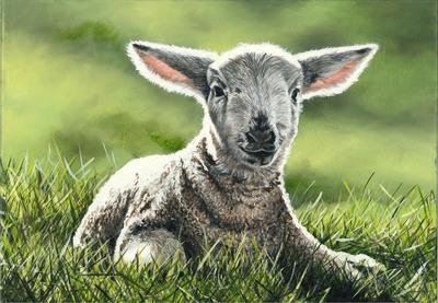 Lamb (A3)