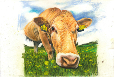 Daisy Cow - A4 Pastel Sketch