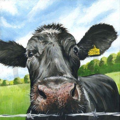 Curious Cow (A3)