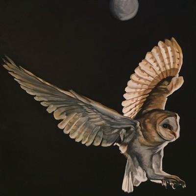 Barn Owl (A3)