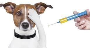 Provide life-saving vaccinations for a shelter pet