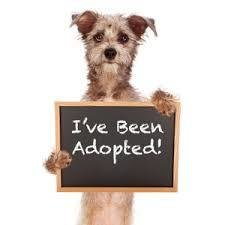 Sponsor an adoption