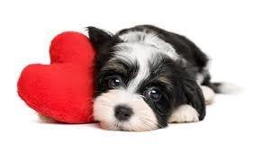 Heartworm treatment for HW+ shelter pet