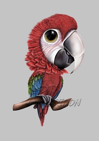 Wackytoysfhorparrotsandbirdsy