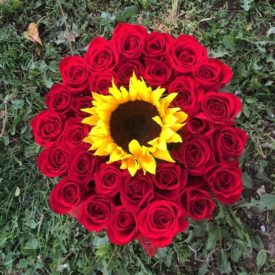 Suria - Girasol y Rosas