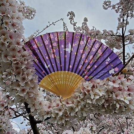 2019 National Cherry Blossom Festival Fan