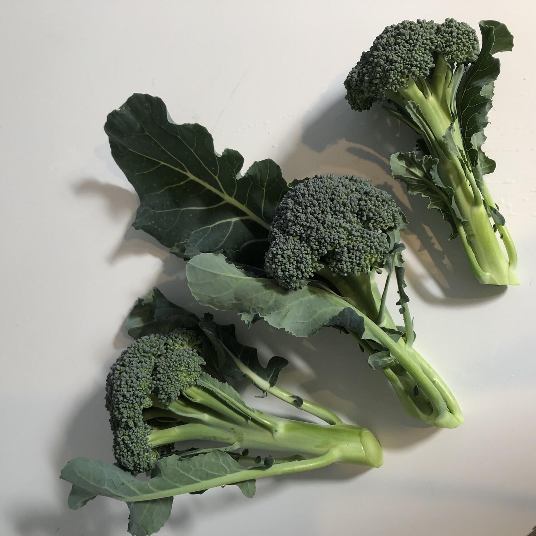 Green Magic Broccoli - 1lb - $4