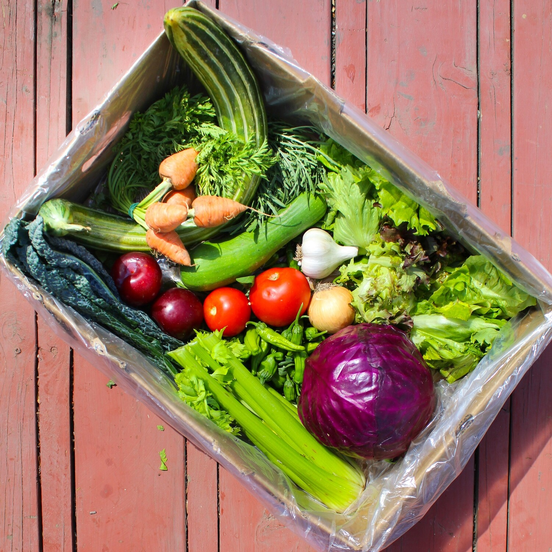 Summer Harvest Farm Box - Family Size - $40