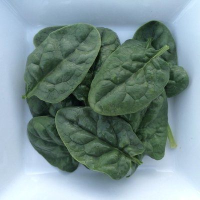 Baby Bloomsdale Spinach - 4lbs