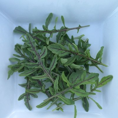 Red Dragon Rucola - 3lbs - $18