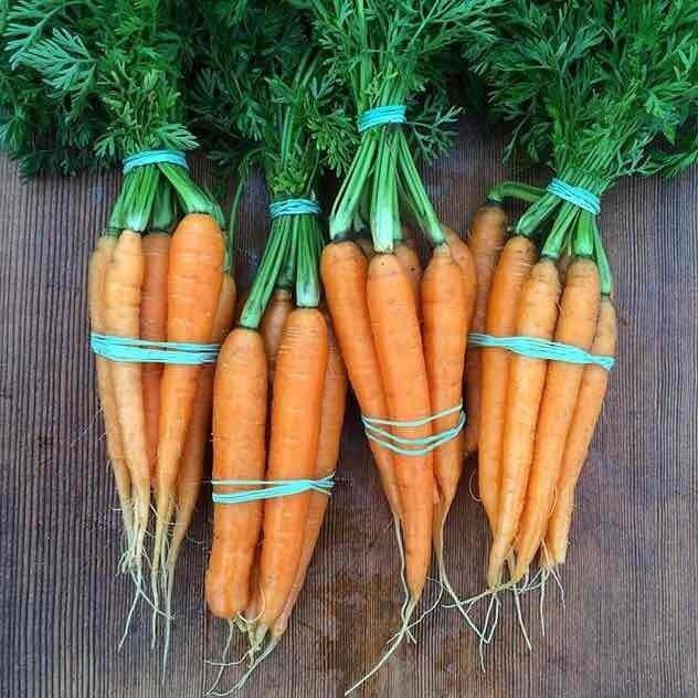 Large Orange Carrots - 1bu - $2