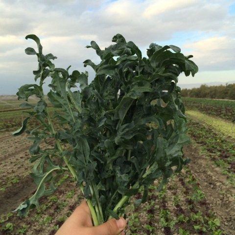 Spigariello Kale - 24ct - $24