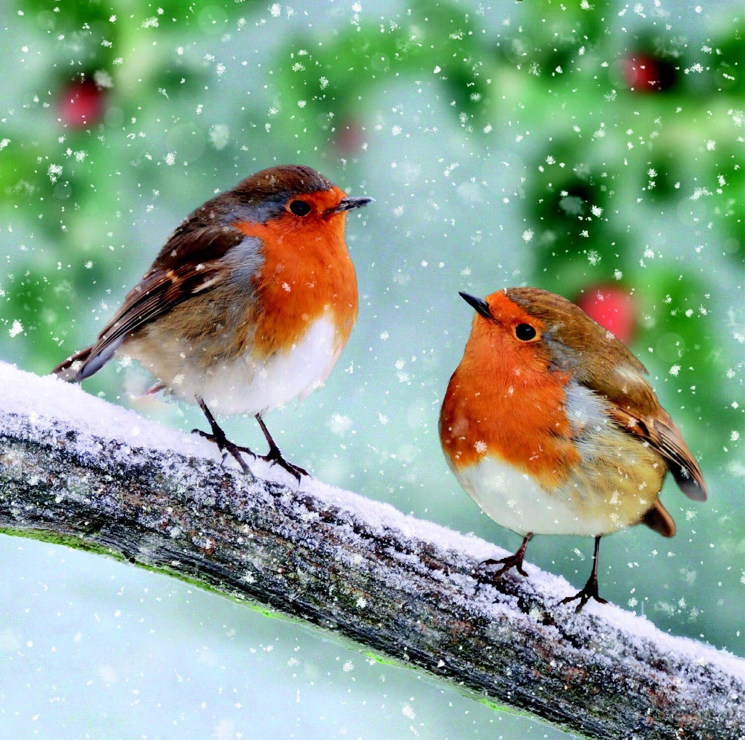 New for 2021 - Snowy Robin Friends - pack of ten