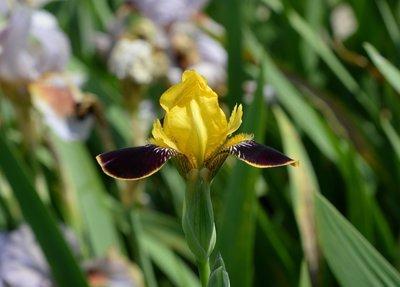 Bumblebee Deelite