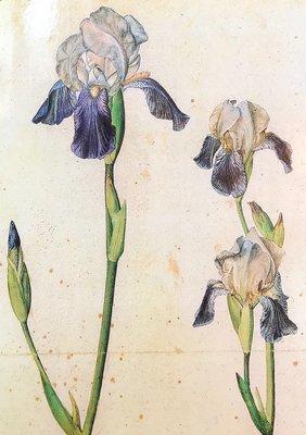 Historic iris collection 2019/Collezione di iris storici 2019