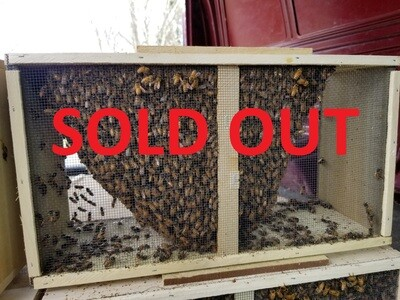 2020 Spring 3 lb. Honeybee Package-SOLD OUT
