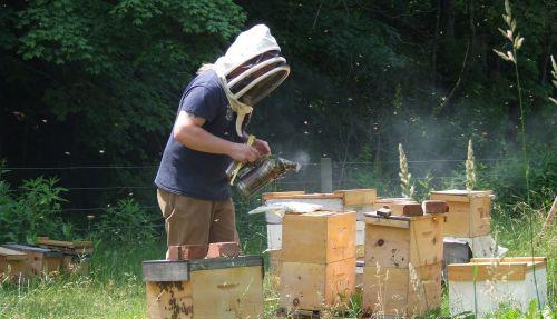 Beekeeping Basics Lesson