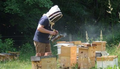 Beekeeping Basics Lesson