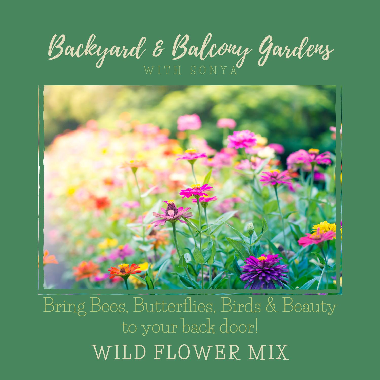 Wild Flower Seeds 10g