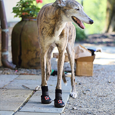 THERA-PAW BOOT (FRONT PAWS)