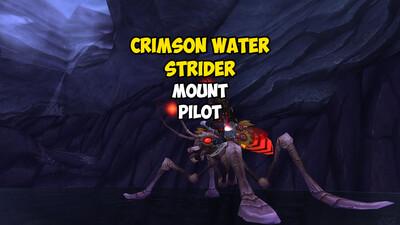 Crimson Water Strider