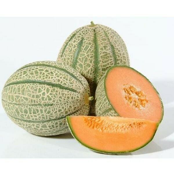 Melone Innestato Retato In Vaso 14