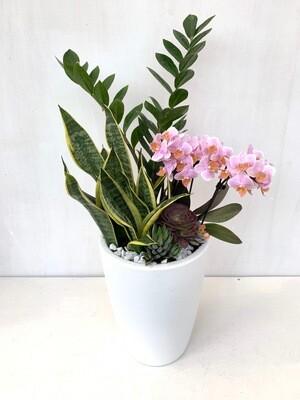 Composizione di piante da Interno su vaso in Resina