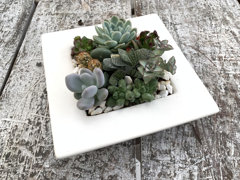 Composizione di Piante Grasse su Ceramica