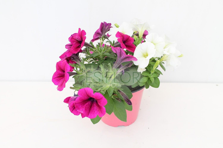 Potunia Ambo Vaso 14