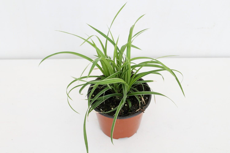 Carex Ice Band Vaso 10 ( Green Combo )