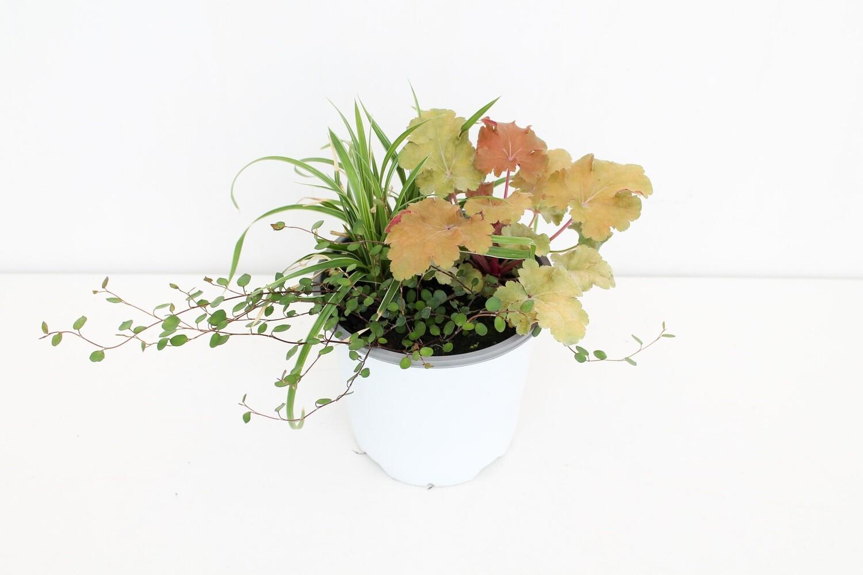 Green Combo Vaso 15