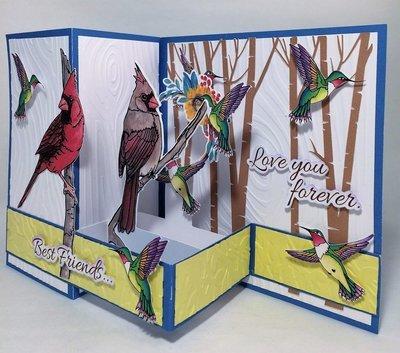 Cardinals & Hummingbirds