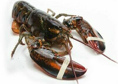 Maine Lobster 活龙虾 2.0-2.3LB