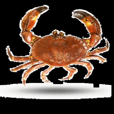 Stone Crab 石头蟹