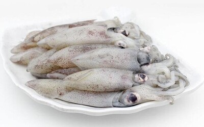 Fresh Squid 新鲜鱿鱼