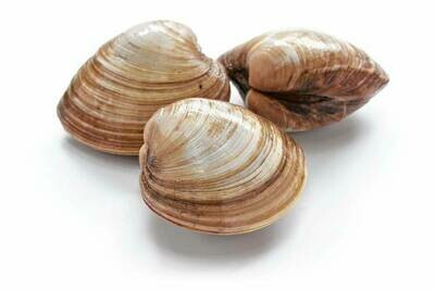 Cherrystone Clams (3 Count) 圆蛤 (3个)