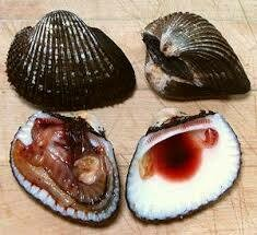 [LIMIT TIME SALE 限时特价]Blood Clams (10 Count) 活血蛤 (1-1.2LB)