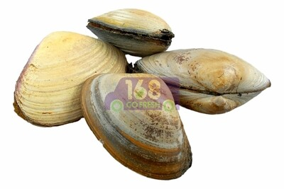 Surf Clams (2 Count) 海蚌 (2个)